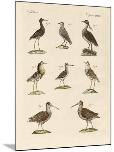 Strange Marsh-Birds--Mounted Giclee Print
