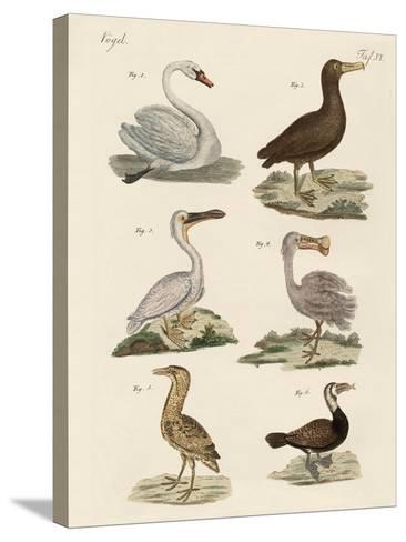 Strange Water Birds--Stretched Canvas Print