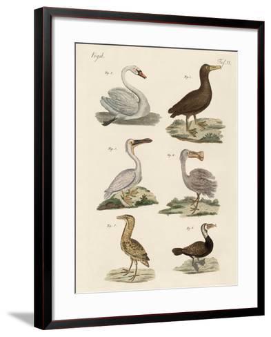 Strange Water Birds--Framed Art Print