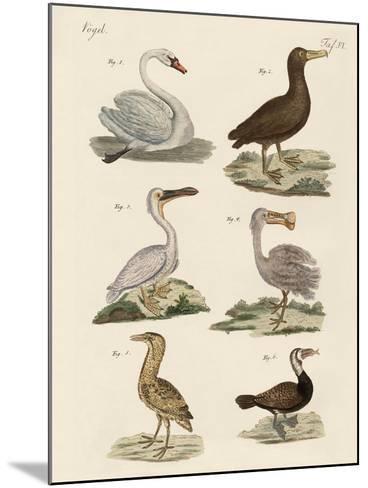 Strange Water Birds--Mounted Giclee Print
