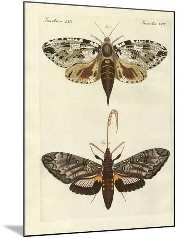 Foreign Moths--Mounted Giclee Print
