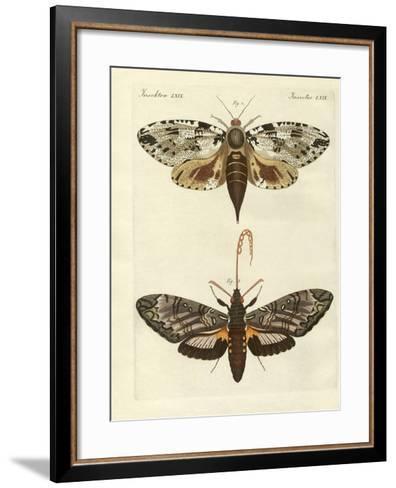 Foreign Moths--Framed Art Print