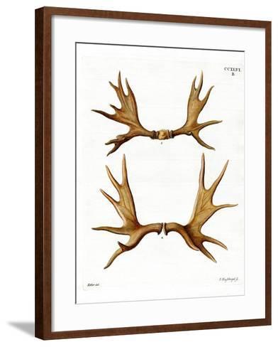 Moose Antlers--Framed Art Print