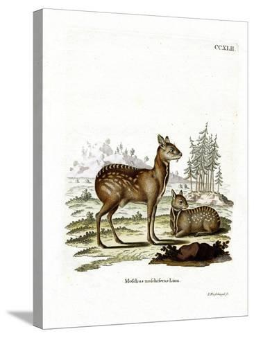 Siberian Musk Deer--Stretched Canvas Print