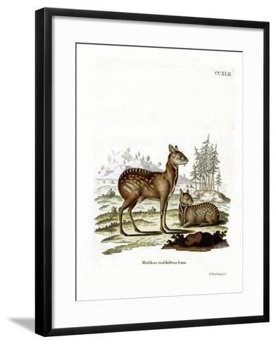 Siberian Musk Deer--Framed Art Print