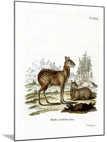 Siberian Musk Deer--Mounted Giclee Print