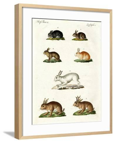 Hares and Rabbits--Framed Art Print