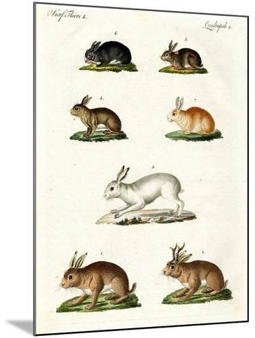 Hares and Rabbits--Mounted Giclee Print