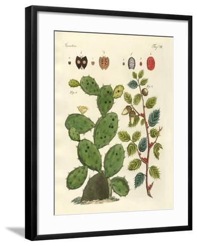 Precious Insects--Framed Art Print