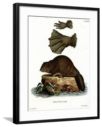European Beaver--Framed Art Print