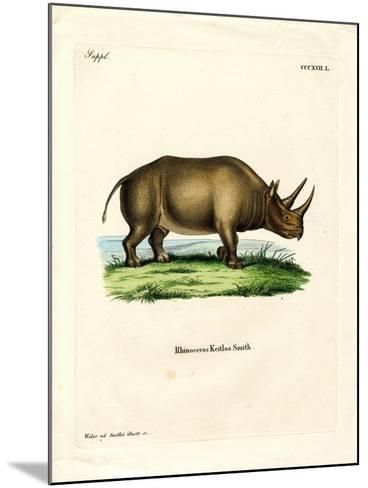 African Rhinoceros--Mounted Giclee Print