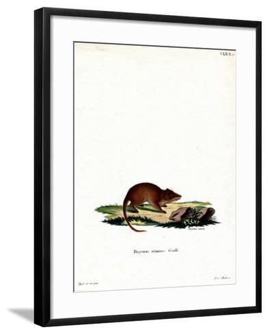 Swamp Antechinus--Framed Art Print