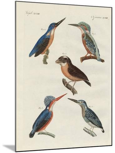 Beautiful Birds--Mounted Giclee Print