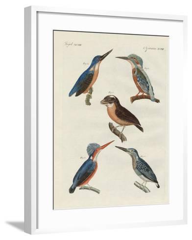 Beautiful Birds--Framed Art Print