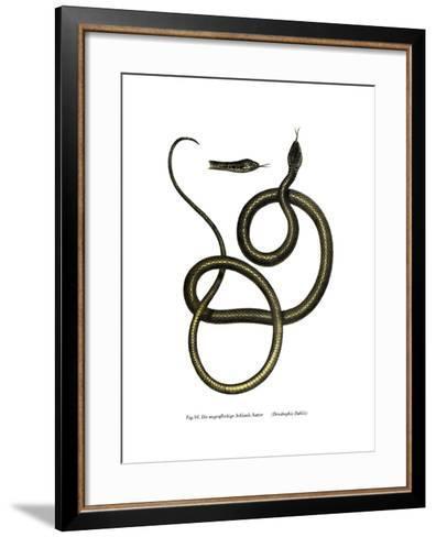 Ghamcheh Snake--Framed Art Print