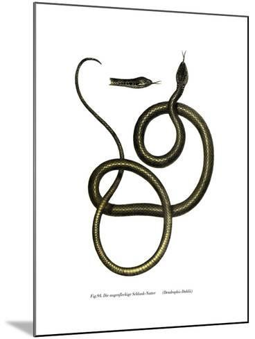 Ghamcheh Snake--Mounted Giclee Print