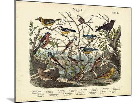 Birds, C.1860--Mounted Giclee Print