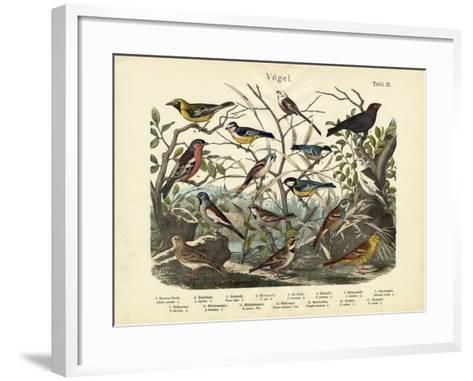 Birds, C.1860--Framed Art Print