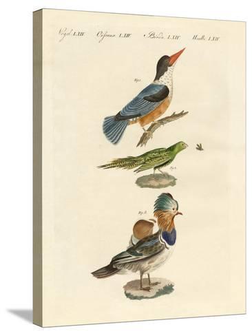 Strange Birds--Stretched Canvas Print