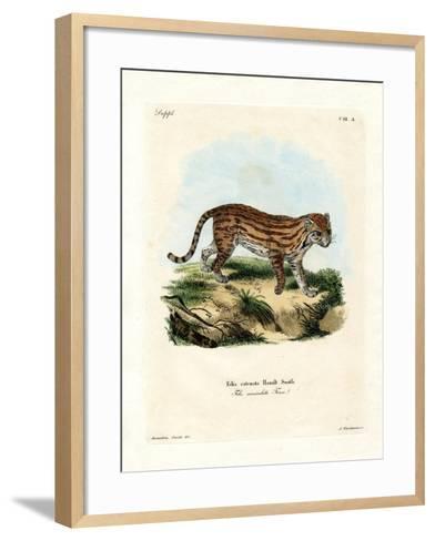 African Wild Cat--Framed Art Print