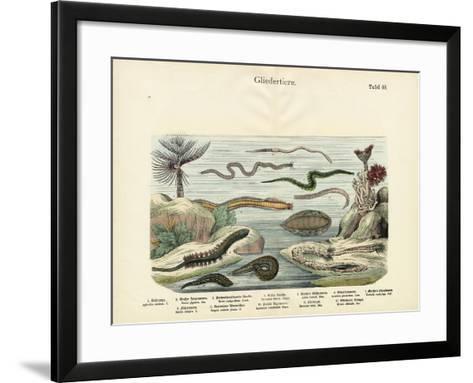 Arthropods, C.1860--Framed Art Print