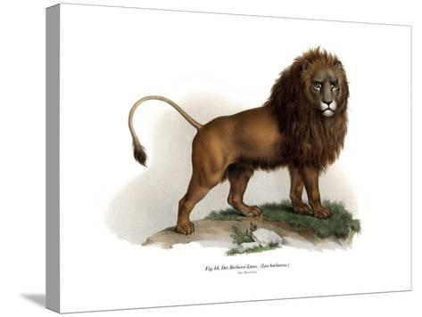 Barbary Lion, 1860--Stretched Canvas Print