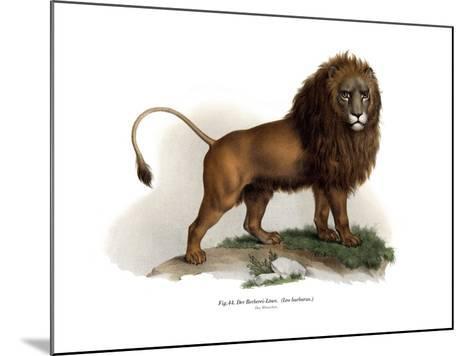 Barbary Lion, 1860--Mounted Giclee Print