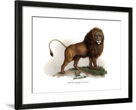 Barbary Lion, 1860--Framed Art Print