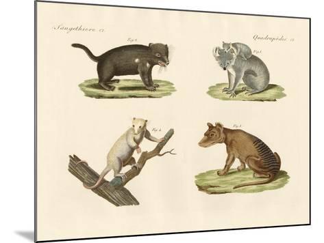 Strange Marsupials--Mounted Giclee Print
