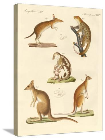 Strange Marsupials--Stretched Canvas Print