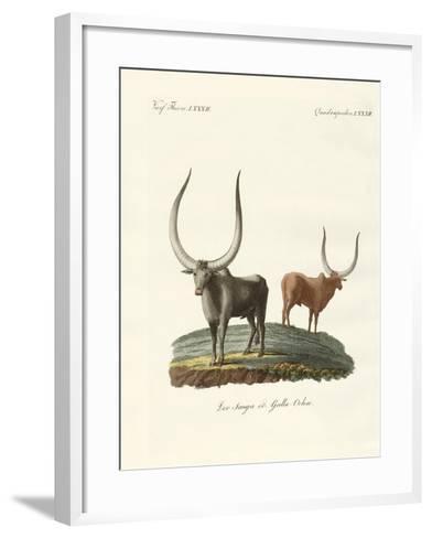 Foreign Mammals--Framed Art Print