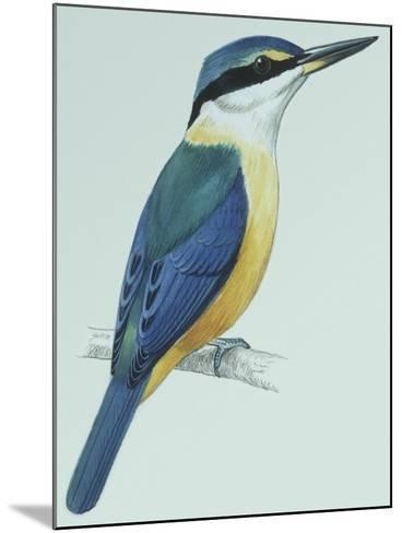 Birds: Coraciiformes, Sacred Kingfisher (Todiramphus Sanctus)--Mounted Giclee Print