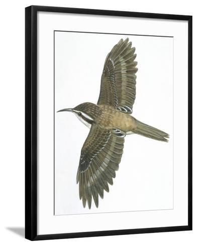 Birds: Passeriformes, Common Treecreeper (Certhia Familiaris)--Framed Art Print