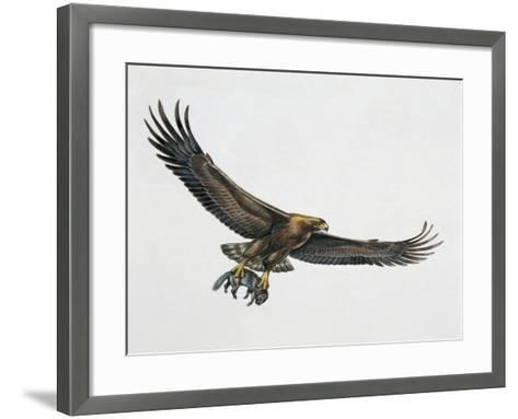 Low Angle View of a Golden Eagle Gripping a Rat (Aquila Chrysaetos)--Framed Art Print