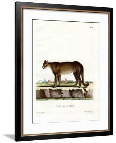 Cougar--Framed Art Print