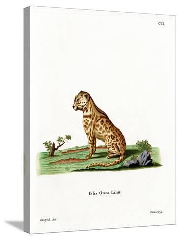 Jaguar--Stretched Canvas Print