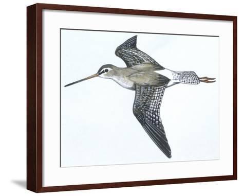Birds: Charadriiformes, Spotted Redshank (Tringa Erythropus)--Framed Art Print