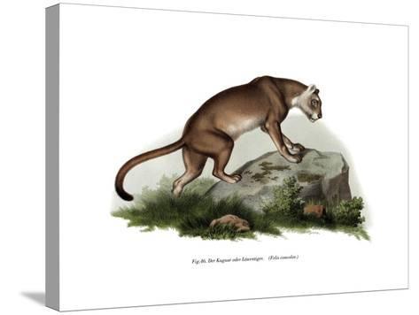 Puma, 1860--Stretched Canvas Print