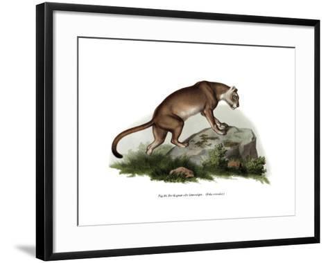 Puma, 1860--Framed Art Print