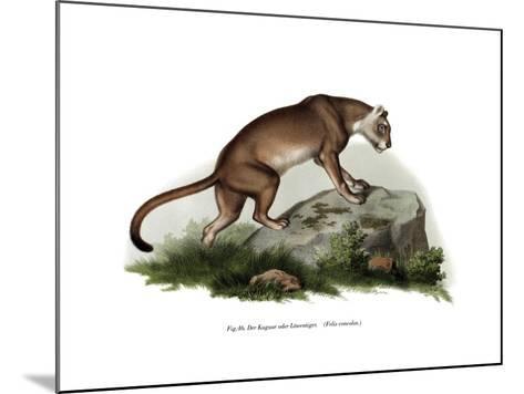 Puma, 1860--Mounted Giclee Print