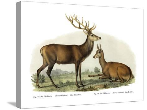 Stag, 1860--Stretched Canvas Print