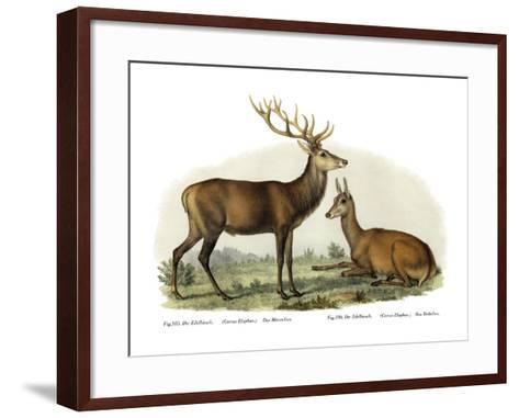 Stag, 1860--Framed Art Print