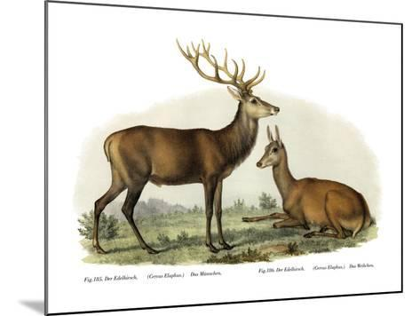 Stag, 1860--Mounted Giclee Print