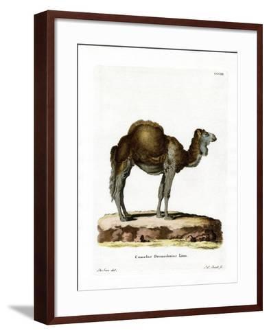 Dromedary--Framed Art Print