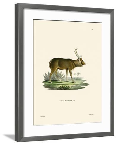 Sambar--Framed Art Print