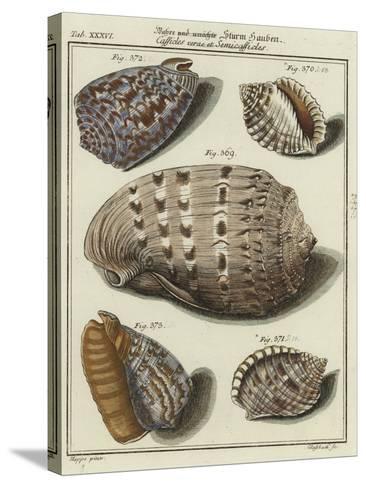 Shells--Stretched Canvas Print