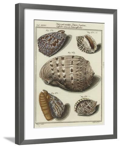 Shells--Framed Art Print