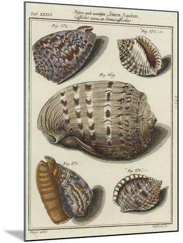 Shells--Mounted Giclee Print