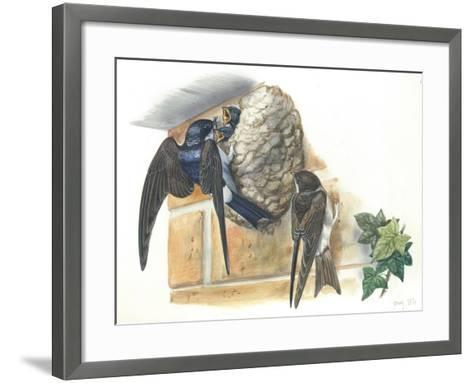 Common House Martin Delichon Urbicum Feeding Young in Nest--Framed Art Print