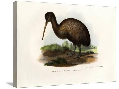 Kiwi, 1864--Stretched Canvas Print